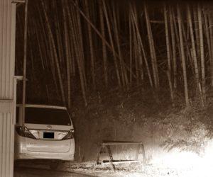 秋元優里の不倫場所の竹林写真