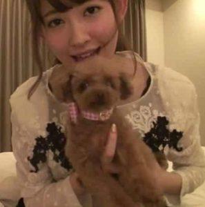 小嶋陽菜の飼い犬画像