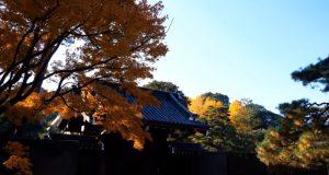 皇居乾通り一般公開の紅葉画像写真3