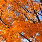 皇居一般公開(秋の乾通り)の紅葉の画像/写真!事前予約申込みや入場料金を調べてまとめてみた